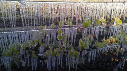 A heavy spring frost at Goodchild Vineyard