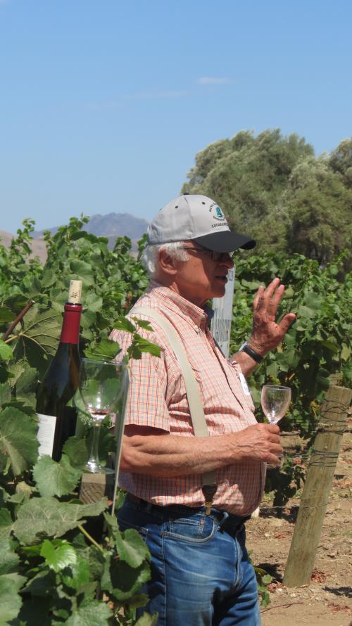 Louis Lucas in the vineyard