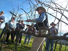 Louis Lucas pruning in the vineyard