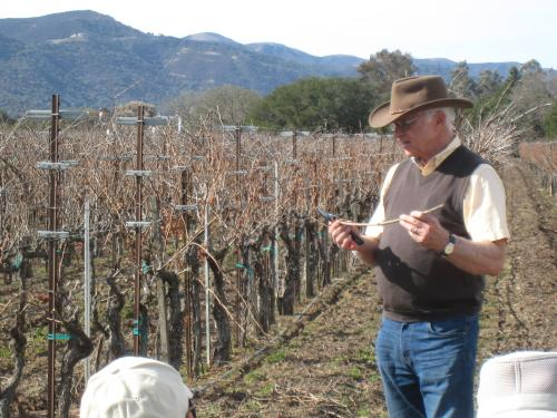 An image of Dirtman Louis Lucas giving a grapevine pruning lesson at Valley View Vineyard