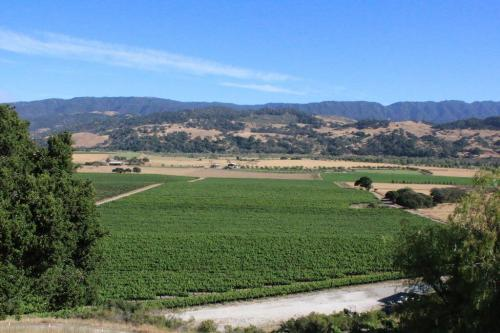 The Valley View Vineyard outlook