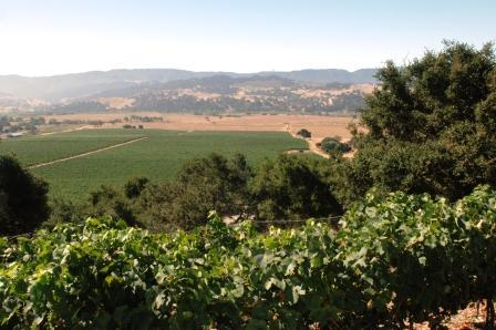 Valley View Vineyard