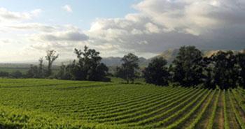 The scenic Goodchild Vineyard in Santa Maria