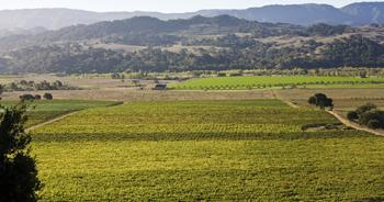 The scenic Valley View Vineyard in Solvang