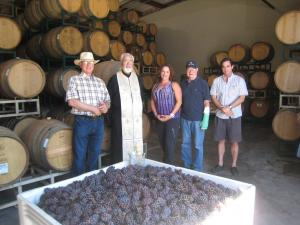 The first Lucas & Lewellen grape crush of 2013