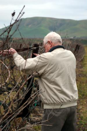 Royce helps out with grape vine pruning at Goodchild Vineyard