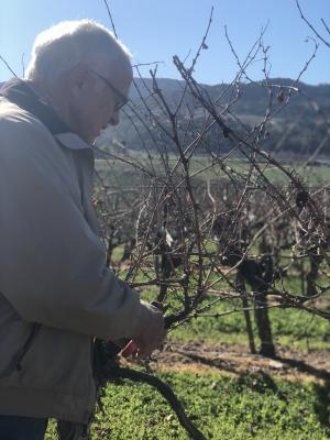 A photo of Louis pruning vines