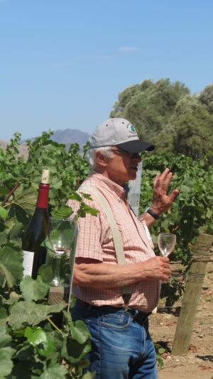 Louis Lucas in the vineyard