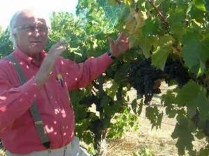 Growing Cabernet Franc - Louis Lucas