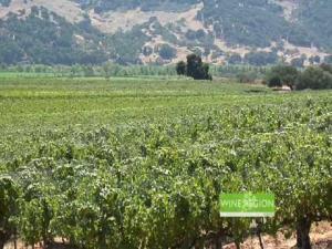 Lucas & Lewellen's Louis Lucas featured on Wine Region News